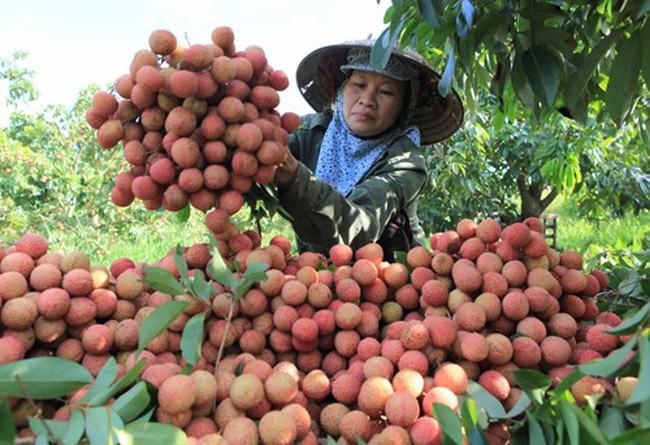 Long Hải nâng tầm giá trị nông sản Việt