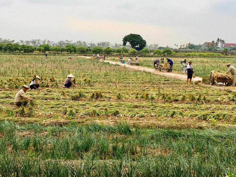 Chủ tịch UBND tỉnh Hải Dương đề nghị các địa phương tạo điều kiện thông thương hàng hoá