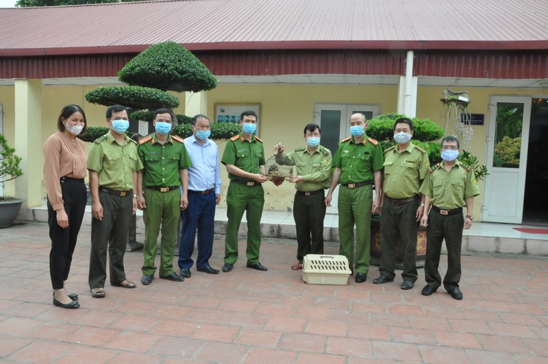 Phân trại tạm giam Đồng Lạc bàn giao cá thể Culi cho Trung tâm bảo tồn động vật hoang dã.