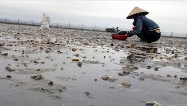 2.000 tấn ngao, nghêu chết ở Quảng Ninh chưa rõ nguyên nhân