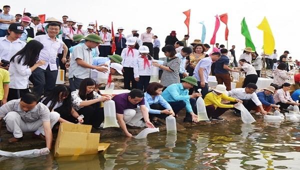 Người dân Thị xã Quảng Yên thả tôm giống vào môi trường tự nhiên