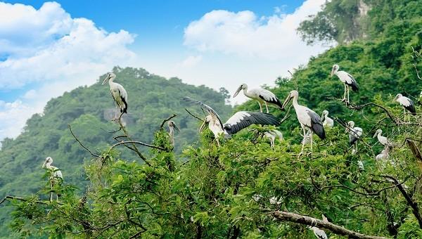 Vườn Chim Khu du lịch sinh thái Thung Nham
