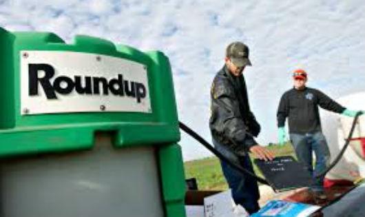 Roundup – nối dài những sản phẩm gây tranh cãi