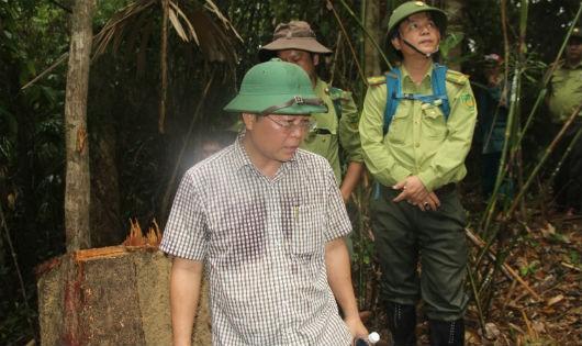 Ông Lê Trí Thanh cùng các lực lượng chức năng kiểm tra hiện trường phá rừng ở Đông Giang