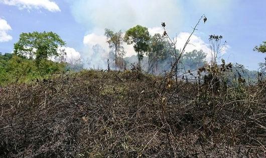 Cánh rừng đang bị đốt gần trạm kiểm lâm số 8