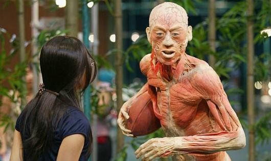 Thi thể người đã bị nhựa hóa được trưng bày trong các cuộc triển lãm.