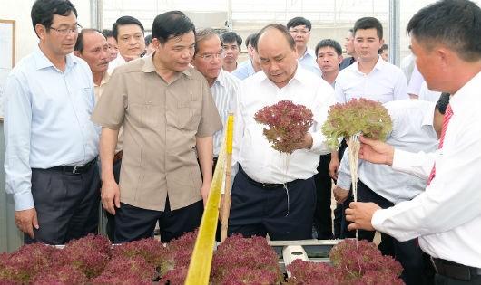 Thủ tướng thăm một trang trại sản xuất giống, khu sản xuất rau thủy canh, khu sản xuất rau an toàn đạt tiêu chuẩn Vietgap.