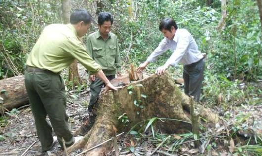 Việc giữ rừng tự nhiên đang là thách thức lớn của nước ta