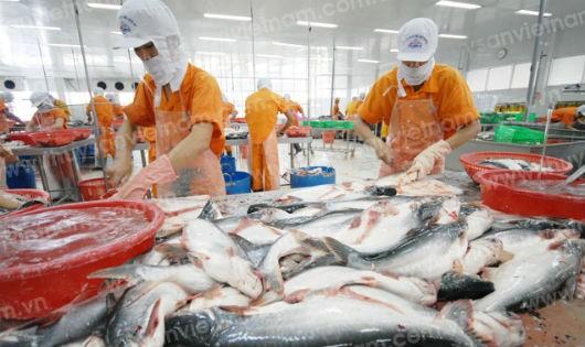 Dự kiến đến cuối năm, việc xuất khẩu cá tra sẽ đạt doanh thu 2 tỷ USD.