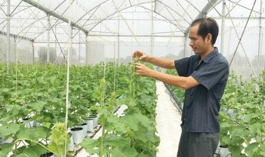 Lo ngại về an toàn thực phẩm dễ bị cường điệu hoá