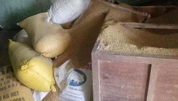 Gia đình nông dân trình báo mất 49 cây vàng giấu trong thùng đựng thóc