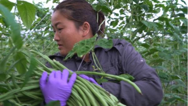 Chuyện đời xót xa của nhiều cô dâu Việt xứ Đài