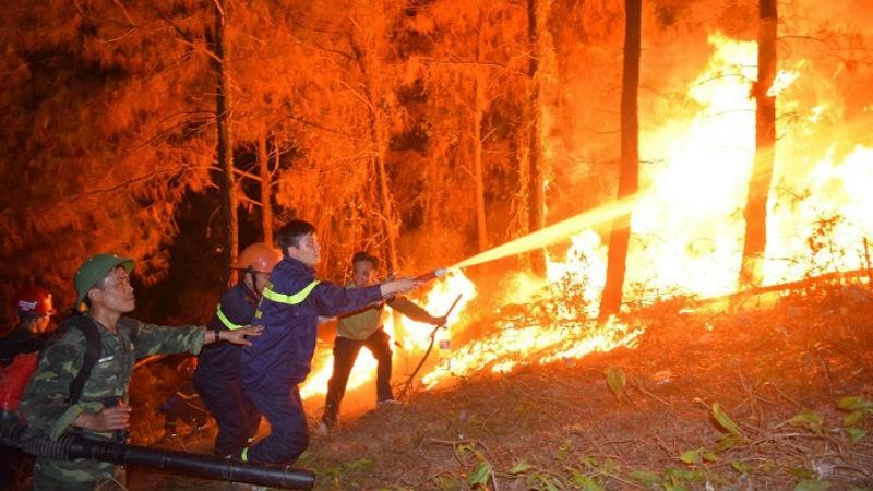 """Hình ảnh lực lượng chữa cháy đang chiến đấu với """"giặc lửa"""" để cứu rừng."""
