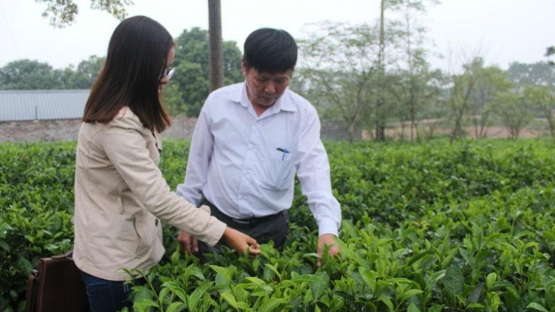 Ông Đỗ Tiến Hùng - Giám đốc HTX Long Phú đang giới thiệu về hoạt động sản xuất chè Long Phú theo tiêu chuẩn VietGap