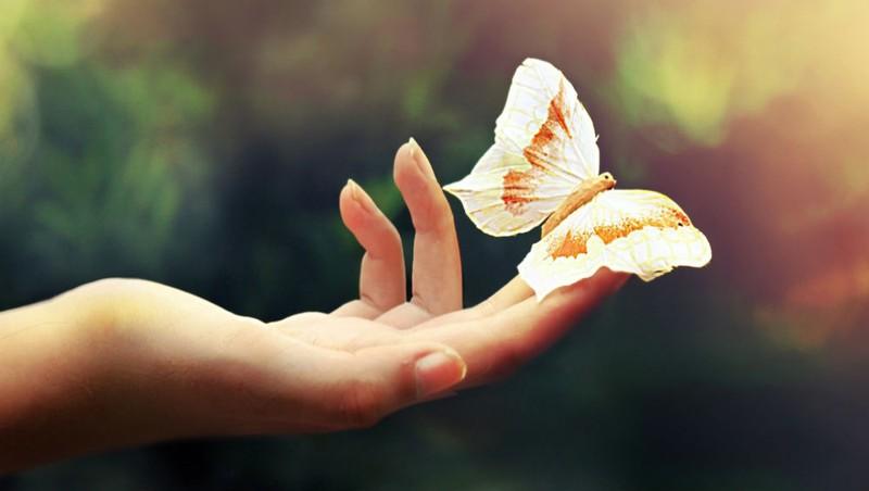 Bí ẩn vận thế con người qua đôi bàn tay