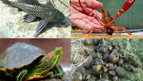 Một số loài ngoại lai xâm hại