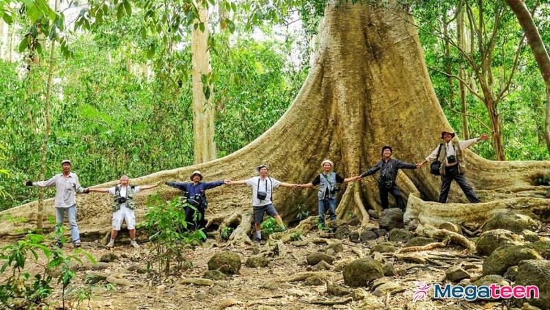 Cựu binh giữ rừng trên Chiến khu Đ