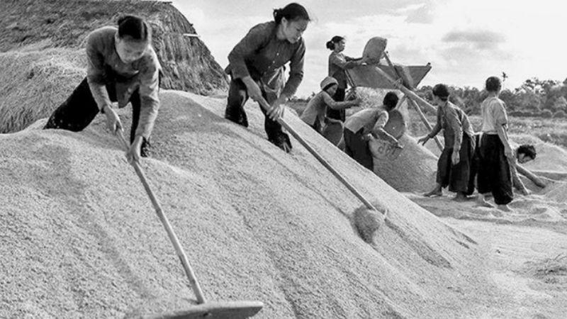 Những cô gái ba đảm đang ở  huyện Vũ Thư, Thái Bình quạt thóc vàng gửi ra tiền tuyến, năm 1967.  (Ảnh tư liệu).