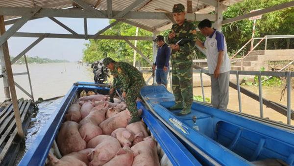 Bộ đội Biên phòng:Phối hợp ngăn chặn hoạt động nhập lậu lợn