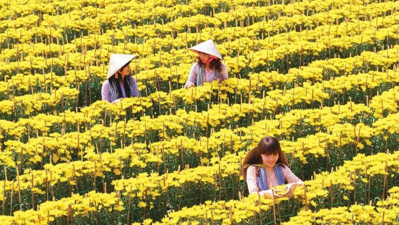 Nhộn nhịp hoa kiểng miền Tây