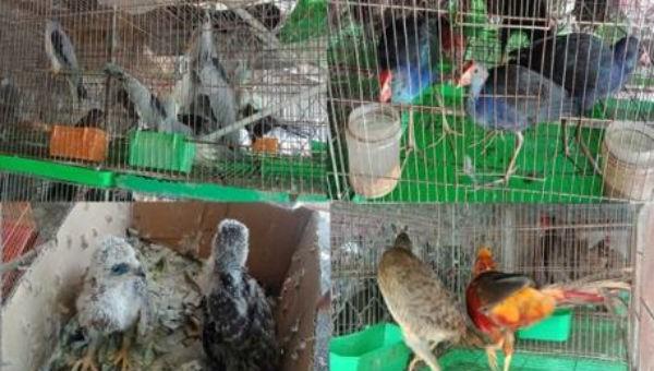 Quản lý chặt động vật hoang dã để phòng dịch bệnh