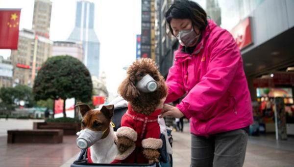 Chó cưng cũng dương tính với virus Corona ở Hồng Kông
