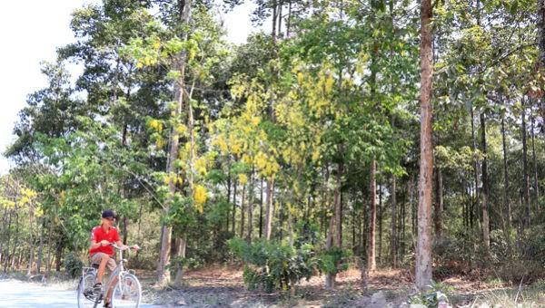 Đồng Nai chi 500 tỷ đồng phát triển rừng phòng hộ