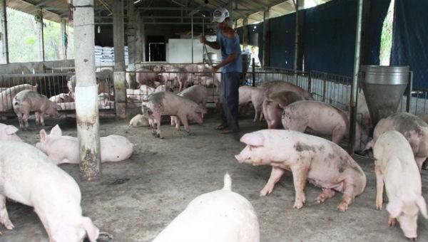 Vệ sinh chuồng lợn phòng, ngừa dịch bệnh.
