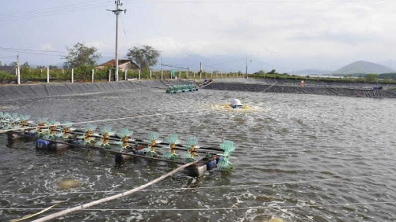 Tháo gỡ khó khăn trong nuôi tôm nước lợ