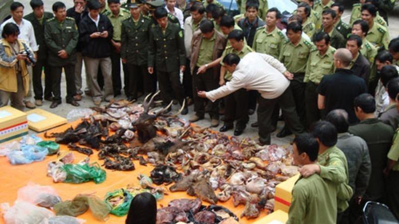 Các vật phẩm từ động vật hoang dã bị cơ quan chức năng thu giữ.