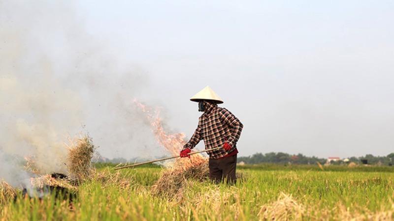 Cảnh báo ô nhiễm môi trường do đốt rơm rạ