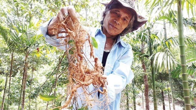 Ông Bh'riu Pố, người thành công với cây sâm ba kích.