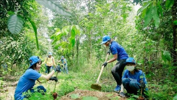 Đẩy mạnh trồng rừng cũng là gìn giữ, bảo vệ môi trường sống của con người. Ảnh minh họa.