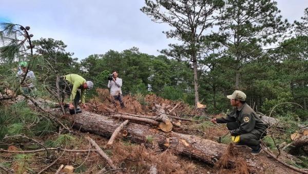 Nạn phá rừng vẫn diễn ra nhiều nơi.