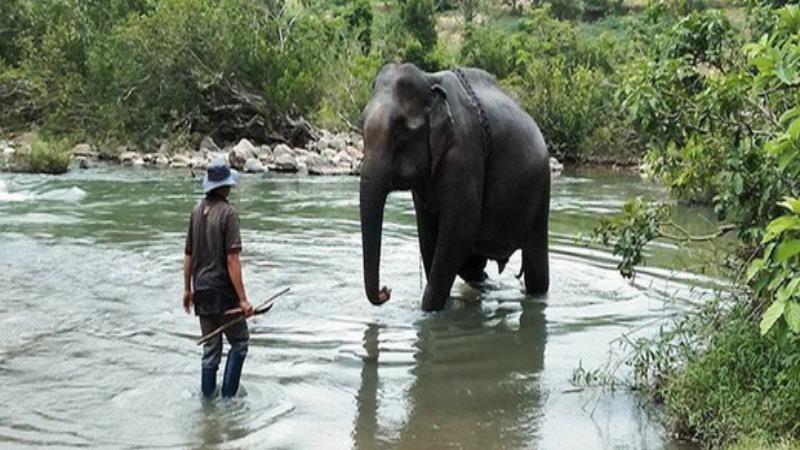 Con voi cuối cùng ở Bắc Tây Nguyên chết bên bờ sông