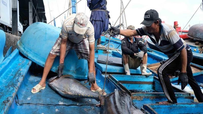 Nỗ lực chấm dứt thủy sản khai thác bất hợp pháp