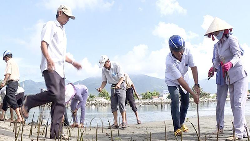 Trồng cây chống xâm nhập mặn tại thôn Hải Triều (tỉnh Khánh Hòa).
