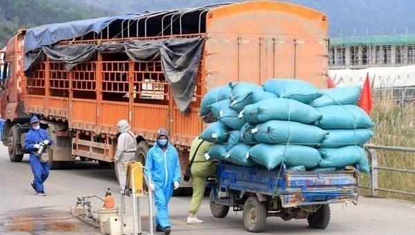 Tập kết, vận chuyển nông sản tại Hải Dương.