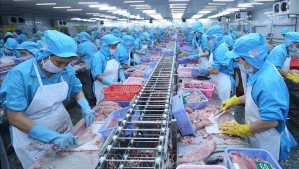 Đưa thủy sản thành ngành kinh tế thương mại hiện đại, bền vững