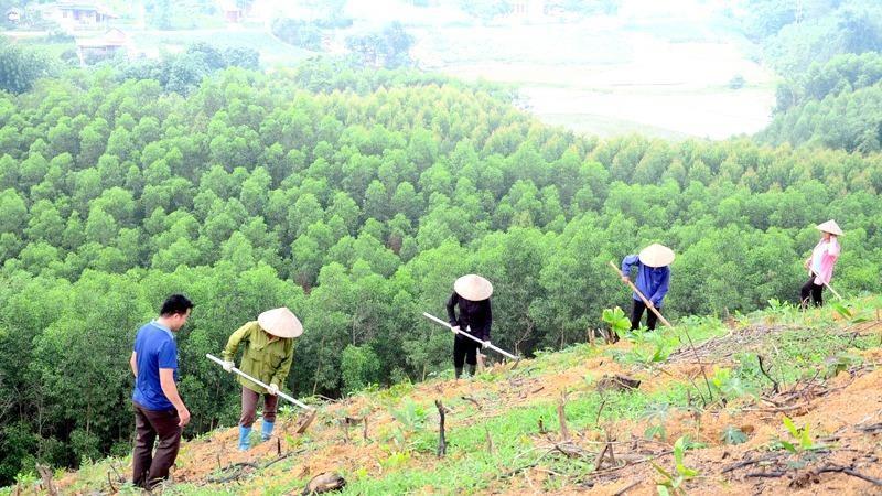 Phục hồi rừng đòi hỏi phải tăng cả về chất lượng và số lượng.