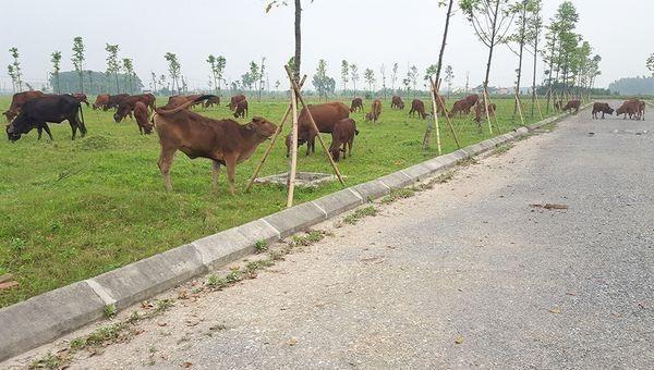 Hà Nội kiến nghị bãi bỏ nhiều quyết định giao đất và chấm dứt dự án