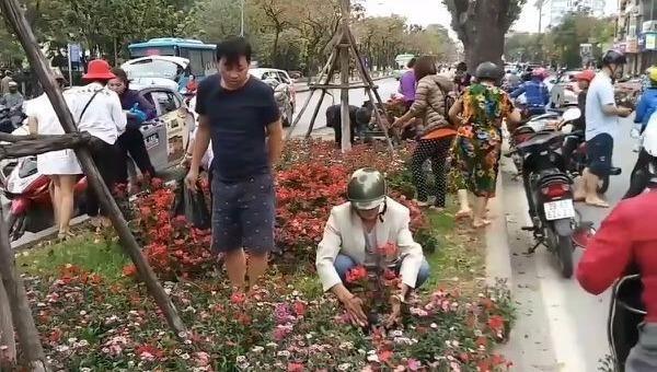 Nạn trộm hoa bùng phát