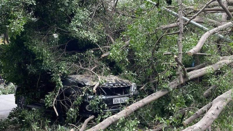 Chiếc xe Fortuner bị cây xanh đè trúng.