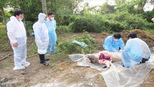 Cơ quan chức năng tiến hành lấy mẫu và tiêu hủy lợn chết do nhiễm dịch tả lợn châu Phi tại xã Phong Sơn. Ảnh Ngọc Minh