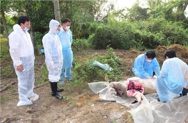Trước đó, cơ quan chức năng đã tiến hành xét nghiệm và tiêu hủy số lợn bị dịch tả tại thôn Hiền An, xã Phong Sơn, huyện Phong Điền
