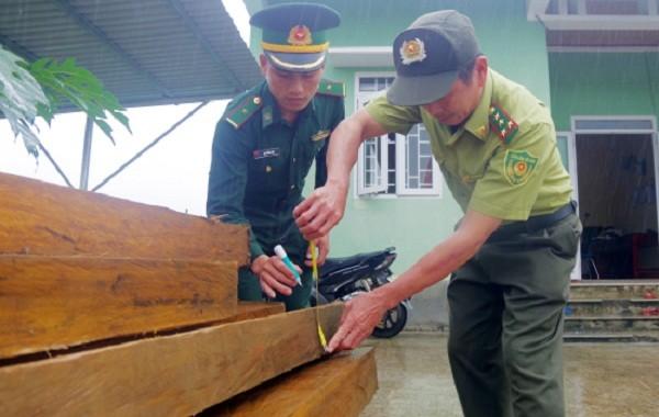 Bắt giữ đối tượng vận chuyển 19 phách gỗ dổi trái phép