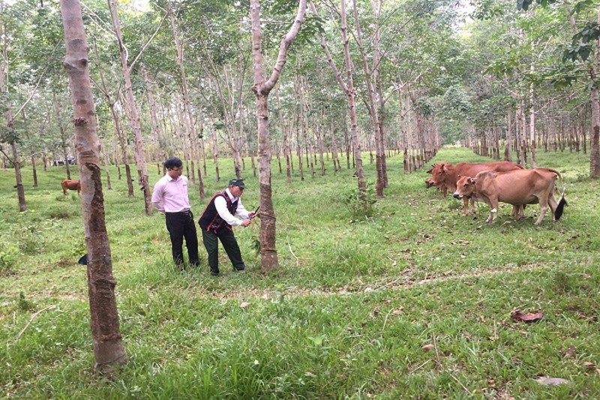 Tín dụng chính sách giúp đồng bào dân tộc thiểu số huyện miền núi Nam Đông thoát nghèo bền vững