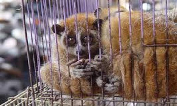 Tỉnh TT- Huế quy định phạt tới hàng trăm triệu đồng nếu có hành vi săn bắt, nuôi, nhốt động vật hoang dã trái phép (ảnh mang tính minh họa)