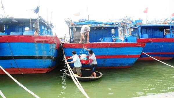 Ngư dân huyện Phú Vang (tỉnh TT- Huế) đưa tàu thuyền vào bờ tránh bão.