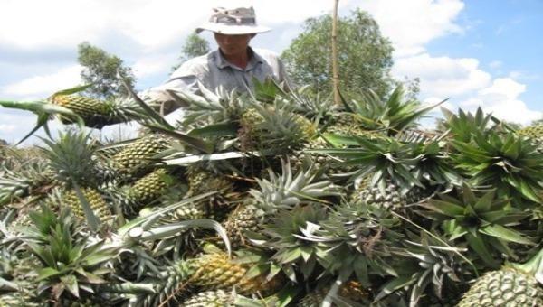 Vùng trồng cây ăn quả của ĐBSCL bị ảnh hưởng nặng nề của tình hình xâm nhập mặn mùa khô năm 2019-2020. Ảnh minh hoạ: iasvn.org